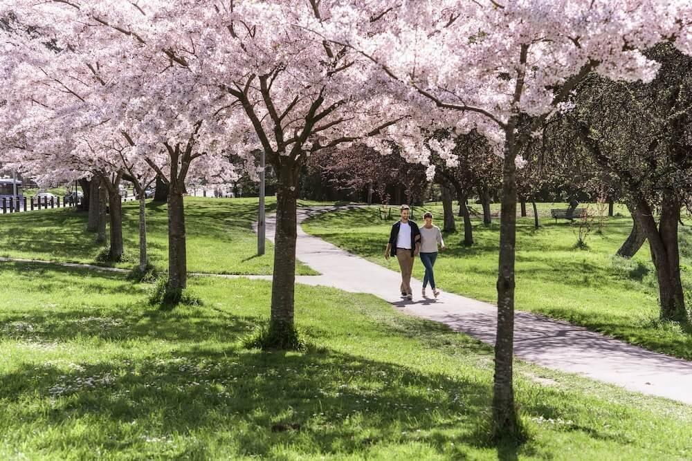 الربيع في نيوزيلندا. صورة من مدينة كرايستشيرش