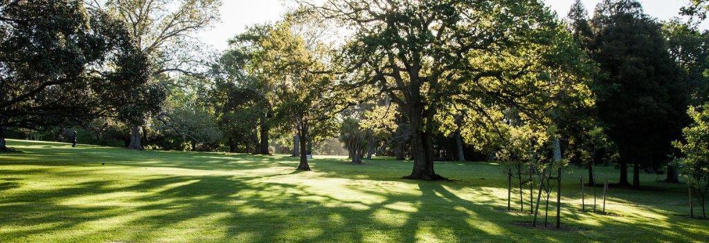 جانب من حديقة Auckland Domain
