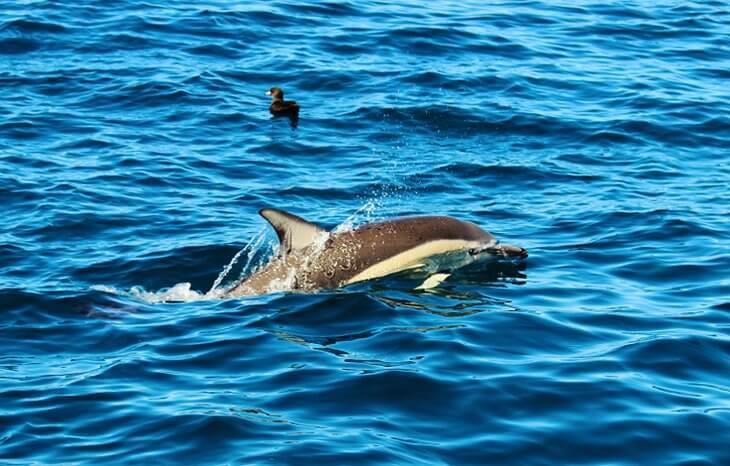 مراقبة الدلافين في منطقة Bay of Islands في أوكلاند
